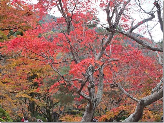 2016京都紅葉 481
