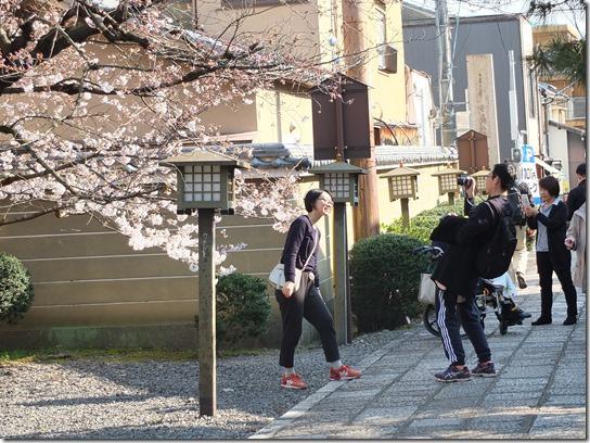 2017京都桜 483