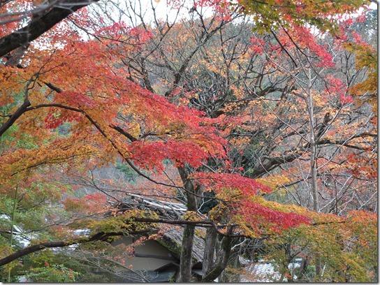 2016京都紅葉 485