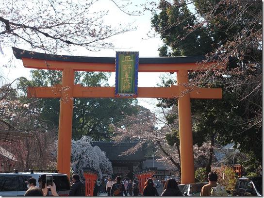 2017京都桜 485