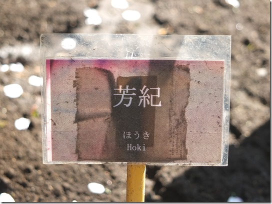 鎌倉 牡丹 桜 488