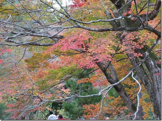 2016京都紅葉 491