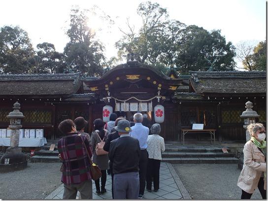 2017京都桜 495
