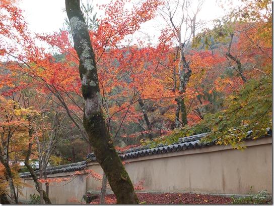 2016京都紅葉 500