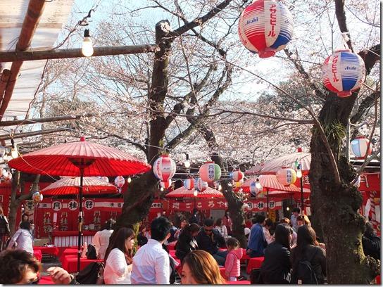 2017京都桜 527