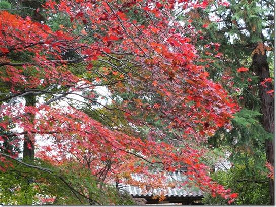 2016京都紅葉 528