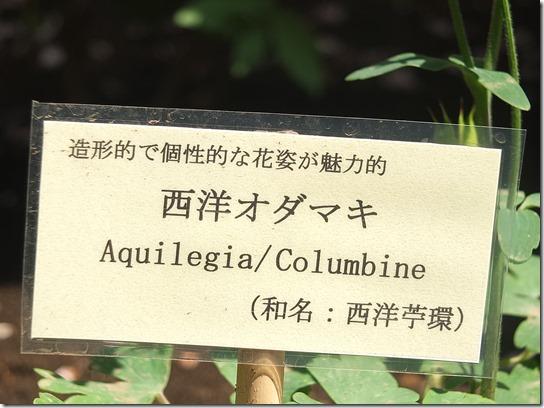 鎌倉 牡丹 桜 530