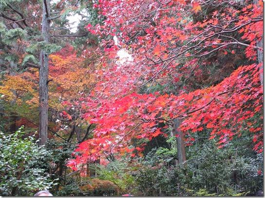 2016京都紅葉 531