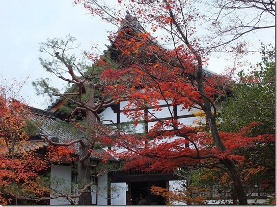 2016京都紅葉 539