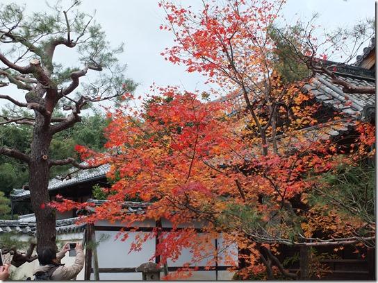 2016京都紅葉 540