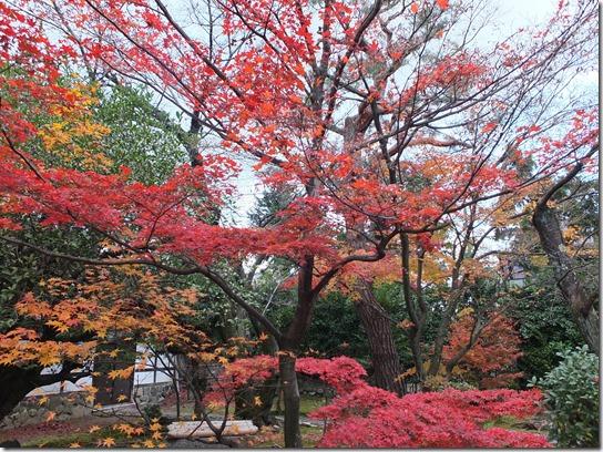 2016京都紅葉 545