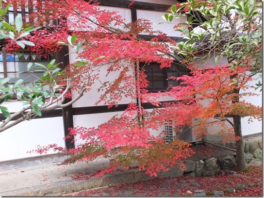 2016京都紅葉 548