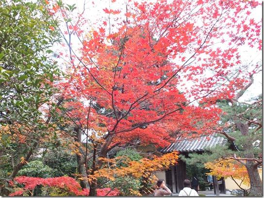 2016京都紅葉 549