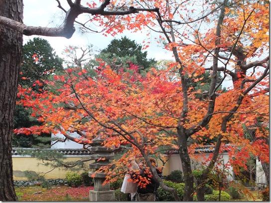 2016京都紅葉 550