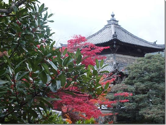 2016京都紅葉 556