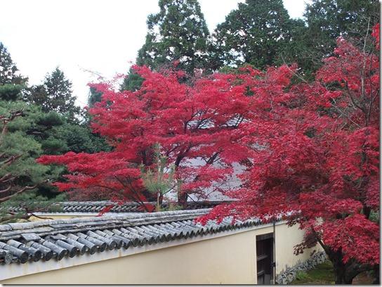 2016京都紅葉 557