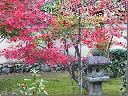 2016京都紅葉 560
