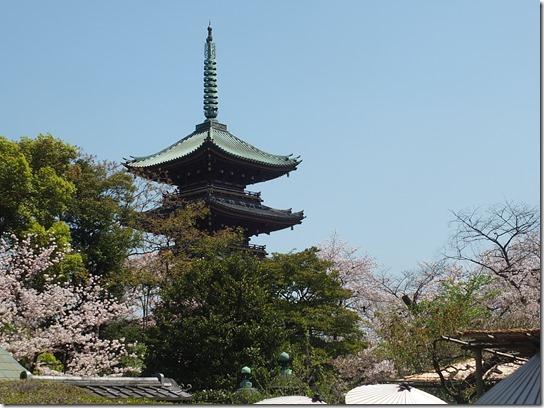 鎌倉 牡丹 桜 564