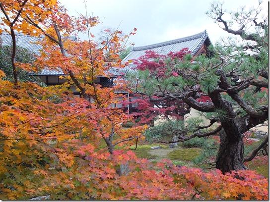 2016京都紅葉 565