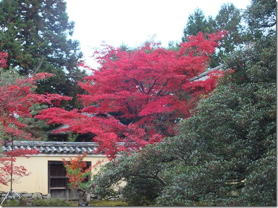 2016京都紅葉 568