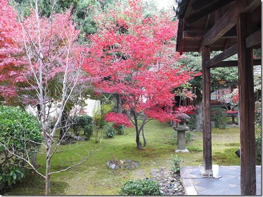 2016京都紅葉 569