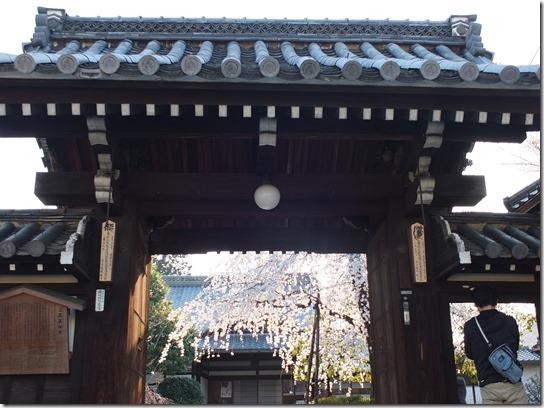 2017京都桜 573