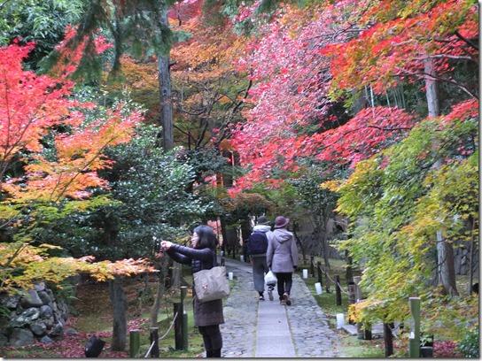 2016京都紅葉 581