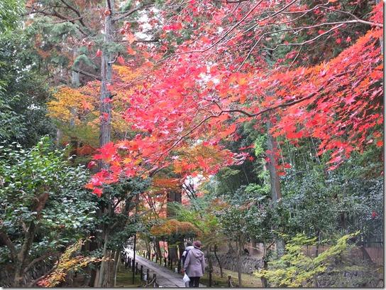 2016京都紅葉 582