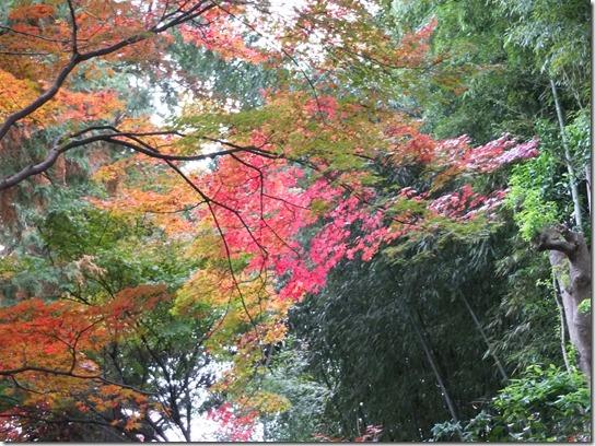 2016京都紅葉 583