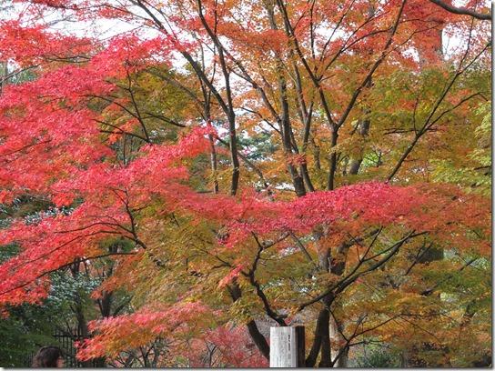2016京都紅葉 601