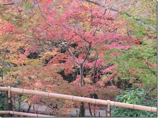2016京都紅葉 613