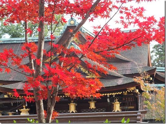 2016京都紅葉 617
