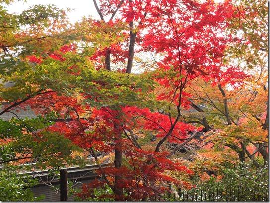 2016京都紅葉 626