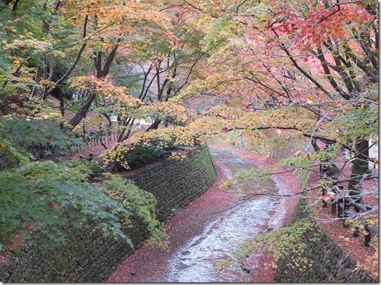 2016京都紅葉 633