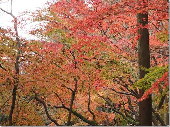 2016京都紅葉 637