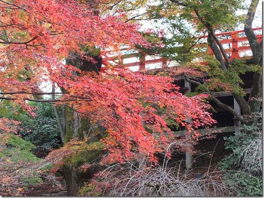 2016京都紅葉 643