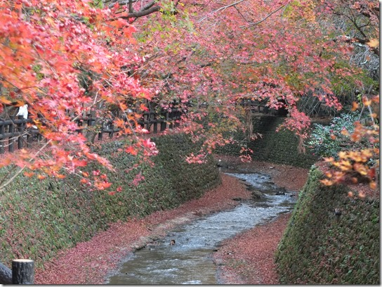 2016京都紅葉 647
