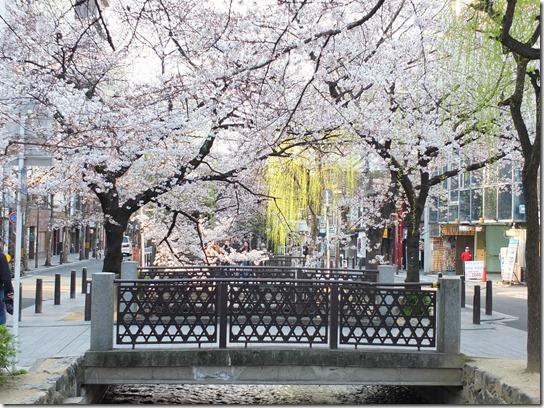 2017京都桜 651