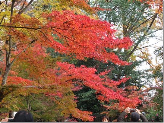 2016京都紅葉 669