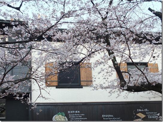 2017京都桜 688