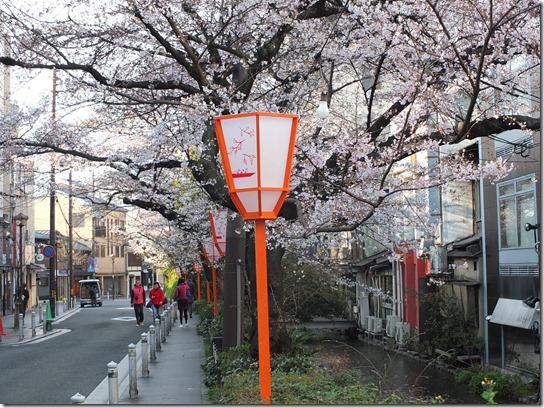 2017京都桜 692