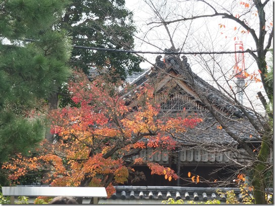2016京都紅葉 695