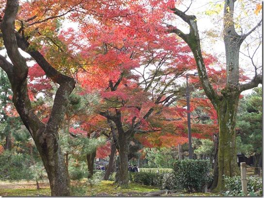 2016京都紅葉 698