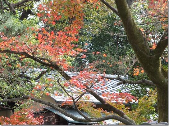 2016京都紅葉 703