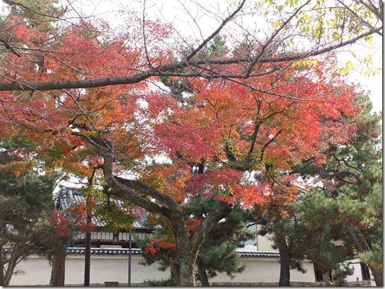 2016京都紅葉 705