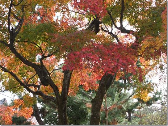 2016京都紅葉 711
