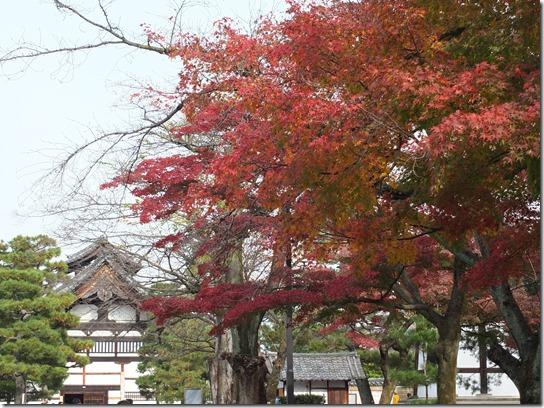 2016京都紅葉 714