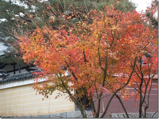 2016京都紅葉 715