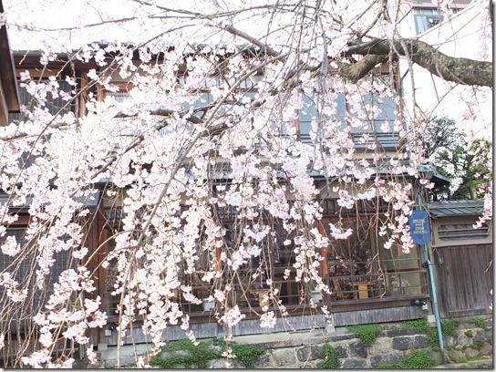 2017京都桜 728