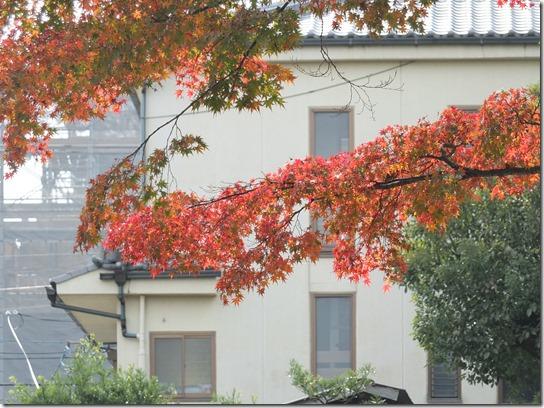 2016京都紅葉 733